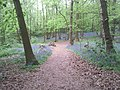 A springtime path in Lesnes Abbey Woods - geograph.org.uk - 1899545.jpg