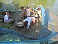 A view of people fishing in Biswanath Chariali, Assam.jpg