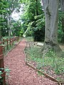 A woodland walk - geograph.org.uk - 1387335.jpg
