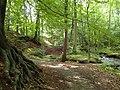 Aarslev Møllepark (skoven).jpg
