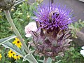 Abc-flower22.jpg