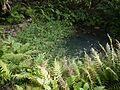 Adenostemma lavenia (L.) Kuntze (8234159763).jpg