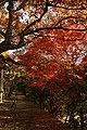 Akashi Castle40n4592.jpg