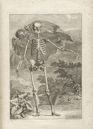 Bernhard Siegfried Albinus - From Albinus' Tabulae sceleti et musculorum corporis humani (London, 1749).