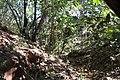 Alto Araguaia - State of Mato Grosso, Brazil - panoramio (217).jpg