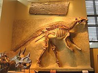 Amherst College Museum of Natural History - IMG 6498.JPG