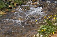 Ammerbach - Wasserreigen.jpg