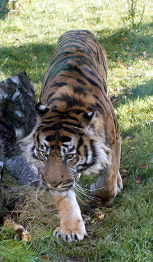 Dublin Zoo - Wikipedia