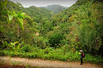 Ubajara National Park - Image: Anderps 014