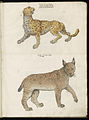 Animal drawings collected by Felix Platter, p2 - (140).jpg