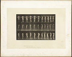 Animal locomotion. Plate 531 (Boston Public Library).jpg