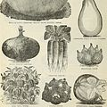 Annual catalogue of Price and Reed, successors to Price and Knickerbocker, importers, growers and dealers in fine flower, vegetable and field seeds - also dealers in horticultural and agricultural (18236297518).jpg