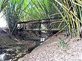 Antiguo Puente del Tren, Cabo Rojo.jpg