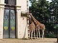 Antwerp Zoo (12210634444).jpg
