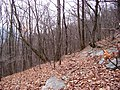 Appalachian Trail - panoramio.jpg
