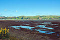 Aramoana Salt Marsh, Otago, New Zealand, 11th. Dec. 2010 - Flickr - PhillipC (1).jpg
