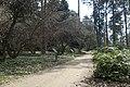 Arboretum Rogow kz05.jpg