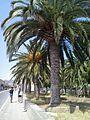 Arecaceae 378.jpg