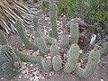 Arizona Cactus Garden 017.JPG