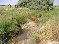 Arroyo de Rejas sentido noroeste. - panoramio.jpg