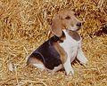 Artois puppy.jpg