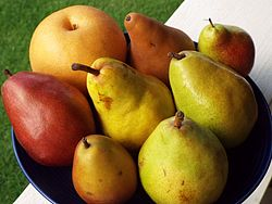 Assortment of pears.jpg