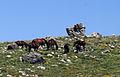 Atlar, Bolkar Dağları.jpg