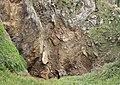 Au Creux du Vis Jèrri Juilet 2010 k.jpg