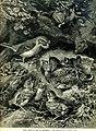 August Specht - Junger Kuckuck im Nest des Rotkehlchens, 1898.jpg
