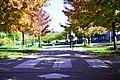 Autumn, Stanley Park Oct, 2015 - 21767304440.jpg