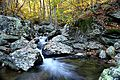 Autumn-forest-creek-waterfalls - Virginia - ForestWander.jpg