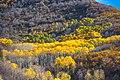 Autumn colours in SW Utah - Hwy 31, along Cottonwood Creek, Utah (15467303129).jpg