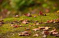 Autumn foliage 2012 (8252564309).jpg