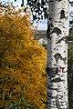 Autumn in Kirov. Russia. Осень в Кирове. Россия - panoramio (3).jpg