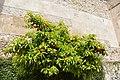 Badajoz, Spain (48547104147).jpg