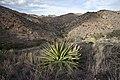 Baker Canyon WSA (9505474642).jpg