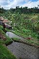 Bali – Rice Terrace (2692079315).jpg