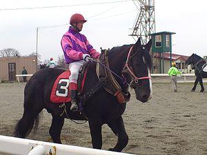 Ban'ei - Ban'ei horse on paddock