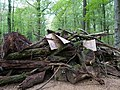 Barrier with protest-signs in the Hambach forest 04.jpg