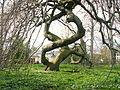 Baum im Botanischen Garten Bonn (2994433911).jpg