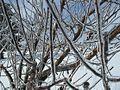 Baum in Eis 01.jpg