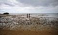 Beach cleanup 140502-N-RI884-006.jpg