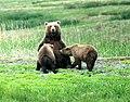 Bears Alaska.jpg