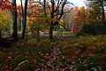 Beautiful-forest-lake-fall-foliage-trail - West Virginia - ForestWander.jpg