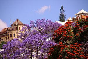 Antananarivu: Beautiful jacaranda Antananarivo Madagascar