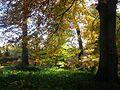 Beeches, Humbie Wood. - geograph.org.uk - 73525.jpg