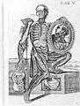 Berrettini,Tabulae Anatonicae, 1741 Wellcome L0026459.jpg