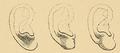 Bertillon - Identification anthropométrique (1893) 062.2.png