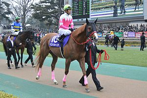 Best-Warrior February-Stakes 2015.jpg