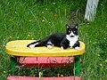 Betty's Cat - panoramio.jpg